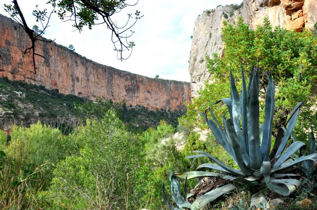 La pared del enfrente et ses cactus