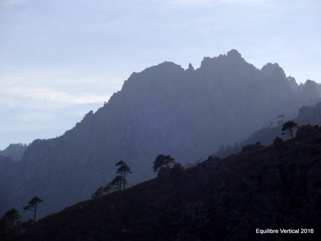 Pins laricio sous fond de montagne corse
