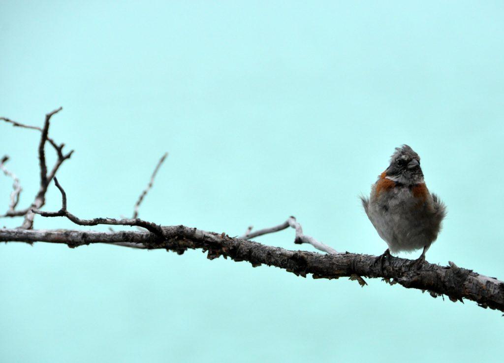 Un oiseau sur sa branche au glacier Perito Moreno