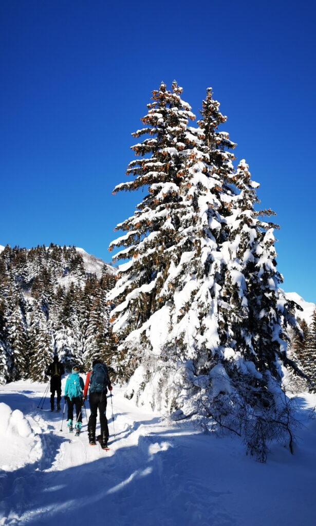 sapins ski de randonnée groupe