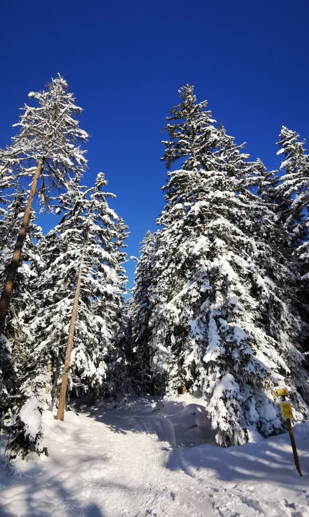 ski-randonnée-sapins-plaine-joux